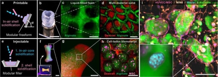 scientists-successfully-3d-printed-living-cells-using-in-air-microfluidics-technique-1.jpg